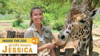 Giraffe Keeper Jessica | Inside the Zoo Ep. 1 thumbnail