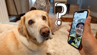 5 Weird Things Every Dog Owner Has Secretly Done