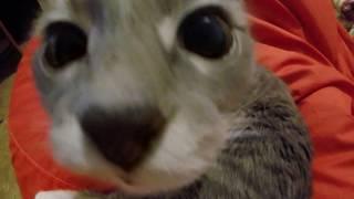 кошка нюхает камеру