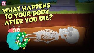 What Happens To Your Body After You Die?   Human Biology   The Dr Binocs Show   Peekaboo Kidz