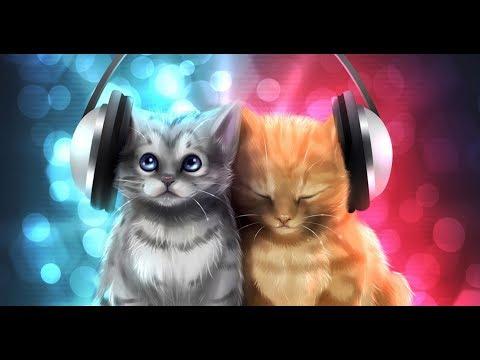 котята поют песню Yiruma - River Flows In You