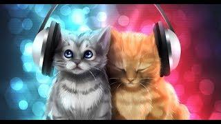 Кошки поют 2017