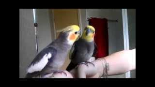 Iri Discovers the Mirror Bird