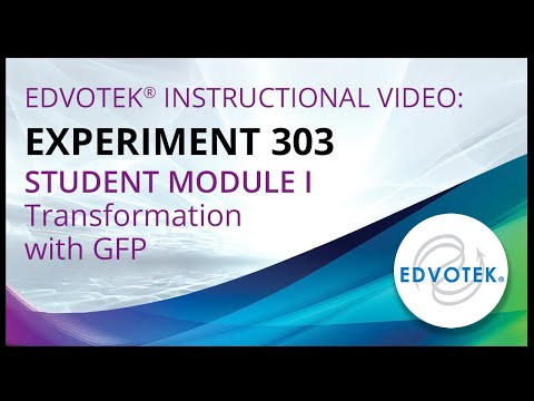 Edvotek Kit #303 - Student Module I - Transformation With GFP