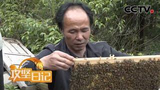 《攻坚日记》罗霄深处有新事(2):置办蜂箱 养蜂脱贫 20200723 | CCTV农业 - YouTube