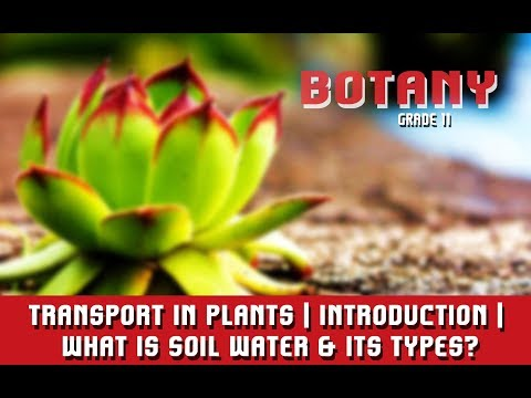 Transport In Plants | Introduction | What Is Soil Water & Its Types?  | Section 1