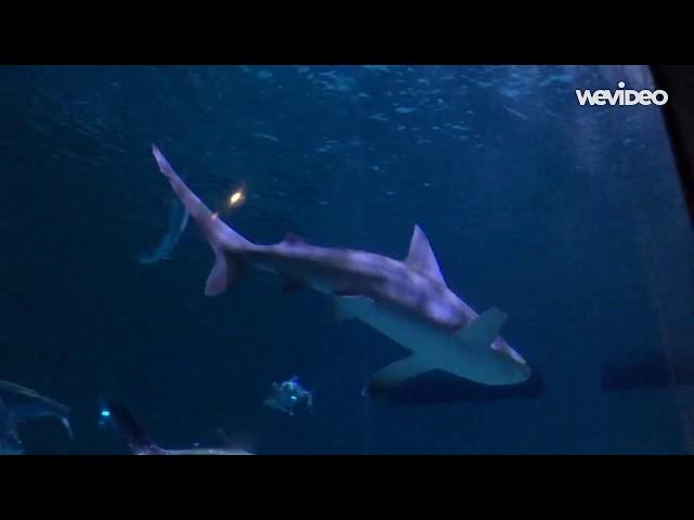 Les CM2 du LFNO à l'Aquarium des Amériques
