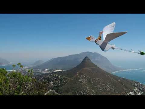Nils Holgersson flies over Hout Bay, Cape Town