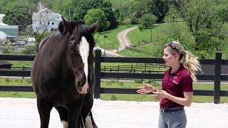 What Keeps You Safe Around Horses