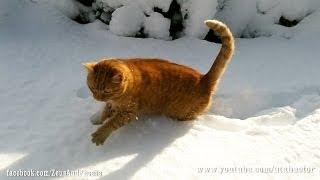 Kitties in deep fresh snow
