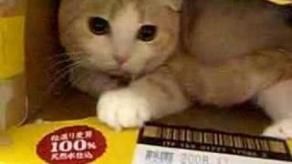 ビール箱猫 thumbnail