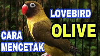 Video Cara Mencetak Olive download MP3, 3GP, MP4, WEBM, AVI, FLV Agustus 2018
