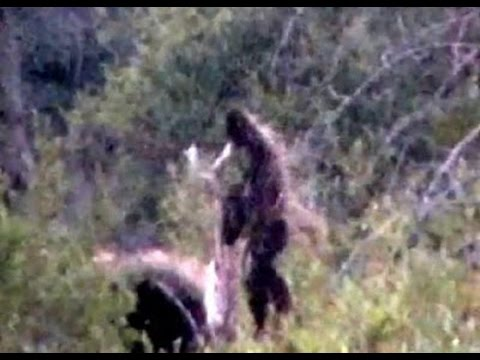 Real Bigfoot Caught On Camera 2015 Bigfoot Evidence Youtube