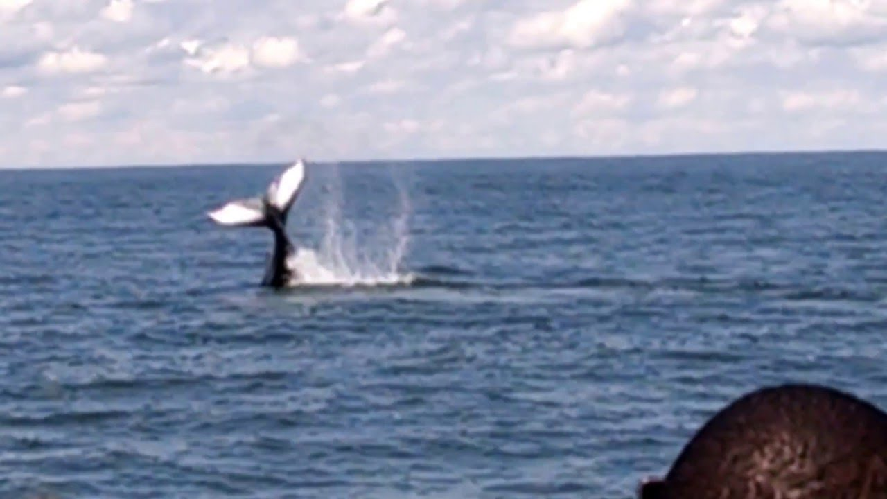 Whale Watching Virginia Beach