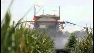 Horodynsky Farms - Onion Farming and Harvesting in Canada