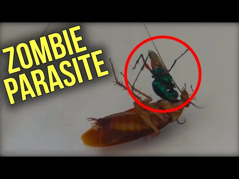 6 Parasites Turn Victims Into ZOMBIES On Camera