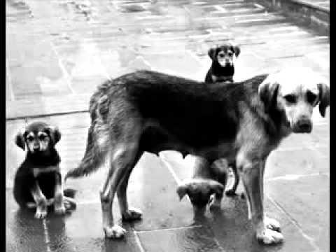 видео собачье сердце