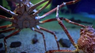 osaka aquarium filmed with a canon 5d mark 2 watch in hd