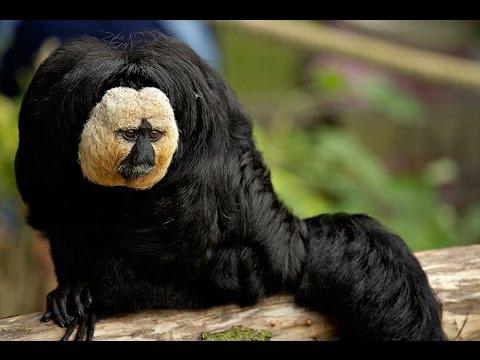 Dünyanın En Korkunç 10 Hayvanı Youtube