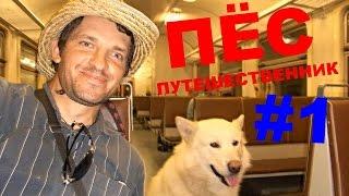 Пёс-путешественник. Маламут. Начало пути на Кавказ #1