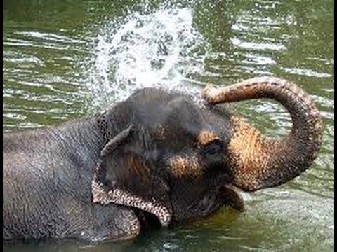 Elephant Taking A Bath Youtube