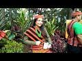 Nippy Voyage to Baguio City