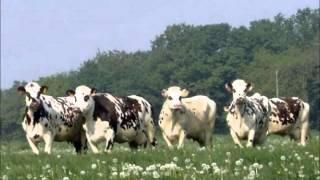 L'élevage normand
