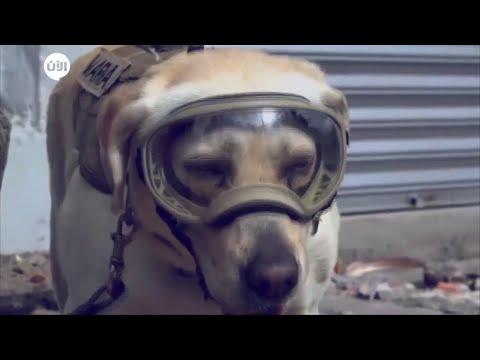 منوعات الآن | الكلبة فريدة.. بطل قومي في المكسيك  - نشر قبل 1 ساعة