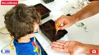Kuzeyle Organik Domates, Biber, Salatalık Ekimi | Çocuk Oyunları Videoları