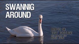 Swanning Around - BMPCC 6K Test Footage
