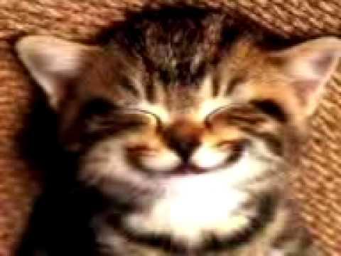 Cat says Happy Birthday 2 U.3gp