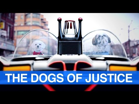 Batman Boss and Robin Milo: The Dogs of Justice