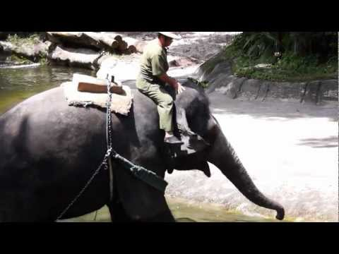 Download Youtube: Elephants Legs, Locomotion and Posture