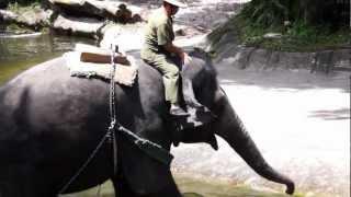 Elephants Legs, Locomotion and Posture