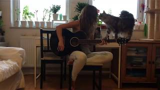My Cute Cat - Sally and the Guitar - Maine Coon Cat