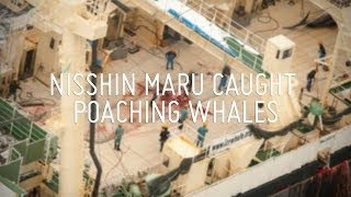 Nisshin Maru Caught Poaching Whales