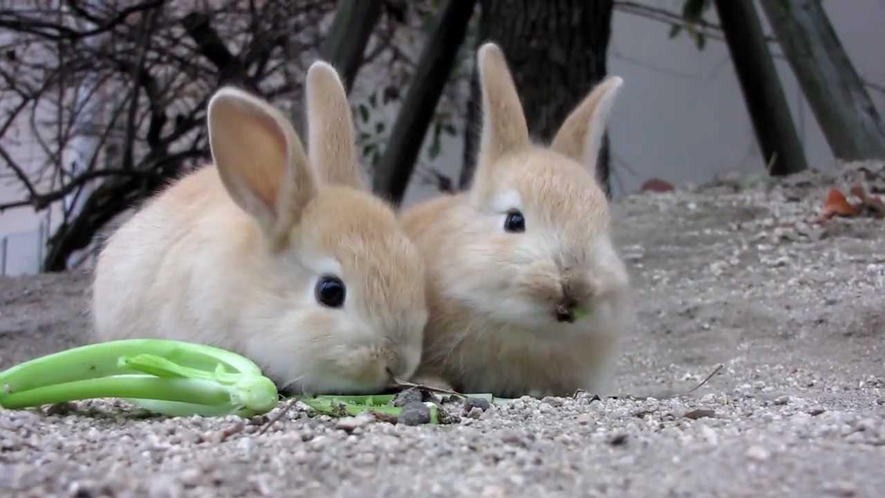 日本、うらやまけしからん!ウサギの大群に追いかけられる女性の姿に世界が嫉妬(大久野島)  カラパイア