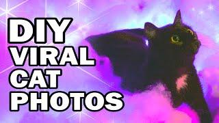Remaking Viral Cat Photos