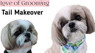 Shih Tzu Gets a Tail Makeover | How to trim a Shih Tzu's Tail Short