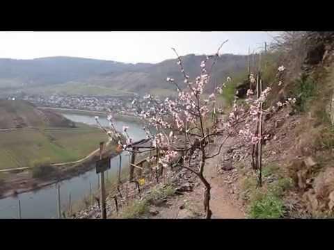 Klettersteig Mosel : Der calmont klettersteig an mosel youtube