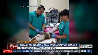 Pomeranians continue with grooming and medical care before adoption