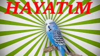 Papağan Ve Muhabbet Kuşu  Hayatim Konuşma Eğitimi Sesi Hazır Ses Kaydı 1 Saat