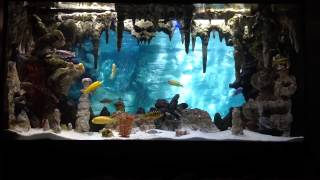 Diy Underwater Cavern Aquarium With 3d Background