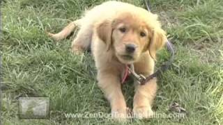 Cute Puppy Video Thumbnail