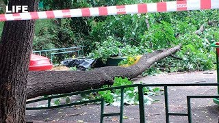 Огромное дерево рухнуло на четыре авто