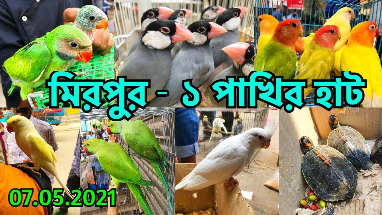 রমজান মাসের শেষ হাটে বিক্রি কম | মিরপুর - ১ পাখির হাট | পাখির দাম জানুন || Mirpur - 1 Haat (V - 268)