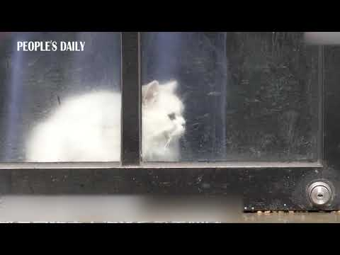 Shanghai police take upon the job of feeding the pets that are left alone