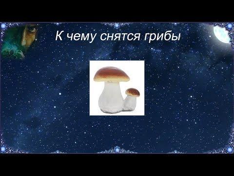 К чему снятся грибы? Грибы во сне, толкование по соннику.