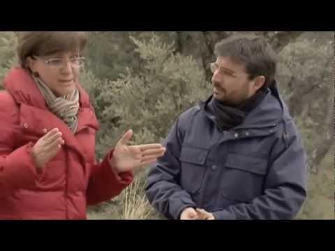 ACTIVIDAD AMPLIACIÓN TEMA 5. OLIGOPOLY. LAS ELÉCTRICAS EN ESPAÑA