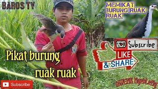 Download lagu PIKAT RUAK RUAK Ketemu master pemikat burung(Tabran Nyak_Zrak)